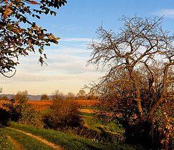 270px-Herbstlandschaft_(am_Rebhang)